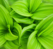 Il verde lascia la priorità bassa astratta Fotografie Stock Libere da Diritti