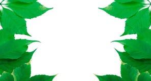 Il verde lascia la priorità bassa con lo spazio della copia Immagini Stock