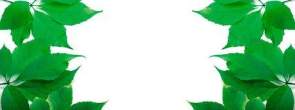Il verde lascia la priorità bassa con lo spazio della copia Fotografie Stock