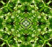Il verde lascia la priorità bassa del reticolo delle mattonelle Fotografia Stock Libera da Diritti