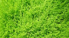 Il verde lascia la priorità bassa della parete Fotografia Stock