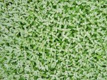 Il verde lascia la priorità bassa Immagini Stock
