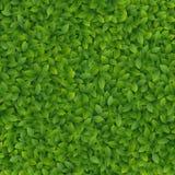 Il verde lascia la struttura Fotografie Stock Libere da Diritti