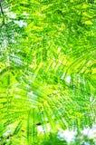 Il verde molto piccolo lascia la priorità bassa Fotografia Stock