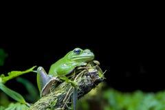 Il verde shinny il fron dell'albero sul tronco con le foglie verdi nel backg nero fotografia stock