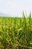 Il verde sistema i cieli blu Fotografie Stock Libere da Diritti