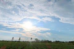 Il verde sistema la luce del giorno Fotografie Stock Libere da Diritti