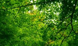 Il verde vivente Fotografie Stock