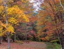 Il Vermont Autumn Glade immagine stock