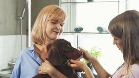 Il veterinario cheking sulla museruola tedesca dei tasso-cani archivi video