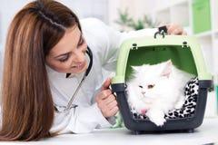 Il veterinario con lo stetoscopio calma il gatto persiano Immagine Stock