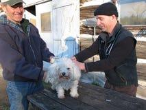 Il veterinario del paese fa un'azienda agricola chiamare immagine stock