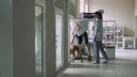 Il veterinario della ragazza mostra un posto nell'infermeria degli animali per un cane nella clinica del veterinario stock footage