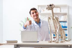 Il veterinario di medico che pratica sullo scheletro del cane Fotografia Stock Libera da Diritti