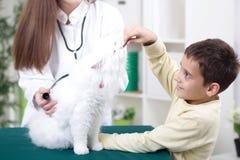Il veterinario femminile con lo stetoscopio esamina il gatto persiano bianco Fotografie Stock