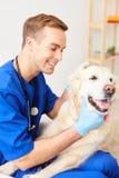 Il veterinario maschio abile è preoccuparsi dell'animale immagine stock libera da diritti