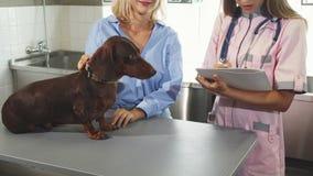 Il veterinario sta facendo le note dopo avere cheking sul tasso-cane tedesco archivi video