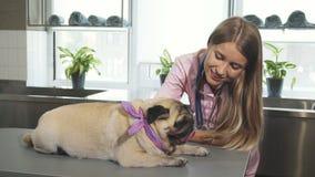 Il veterinario sta segnando il cane del carlino archivi video