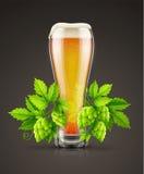 Il vetro della birra chiara leggera con la pianta del luppolo germoglia Immagine Stock