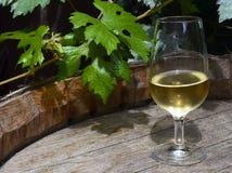 Il vetro di vino bianco sul vecchio barilotto di legno d'annata con l'uva lascia nella vigna di Tenerife, isole Canarie, Spagna Fotografie Stock Libere da Diritti