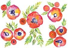 Il vettore dell'acquerello, la primavera e l'acquerello floreali dell'estate vector le strutture, l'insieme decorativo disegnato  Fotografia Stock Libera da Diritti