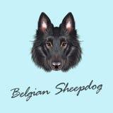 Il vettore ha illustrato il ritratto del pastore belga Fotografia Stock Libera da Diritti
