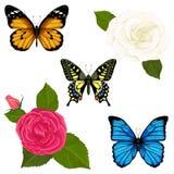 Il vettore ha messo con le farfalle ed i fiori delle rose royalty illustrazione gratis