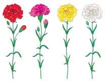 Il vettore ha messo con il profilo fiore del chiodo di garofano o del garofano, germoglio rosso, rosa, pastello e foglia bianchi  royalty illustrazione gratis