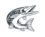 Il vettore monocromatico del pesce del luccio ha isolato illustrazione di stock