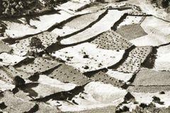 Il vew aereo del raccolto sistema all'alta montagna dell'Himalaya Fotografia Stock