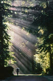 Il viaggiatore con zaino e sacco a pelo si dirige nella foresta Fotografia Stock