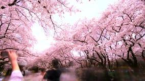 Il viaggiatore ed il fiore di ciliegia nel parco di Ueno, lasso di tempo archivi video