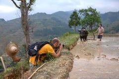 Il viaggiatore ha fotografato l'agricoltore cinese con il bufalo sul riso fi Immagine Stock Libera da Diritti