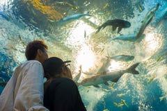 Il viaggiatore o la coppia turistica sta esaminando i pesci in acquario d'acqua dolce immagine stock libera da diritti