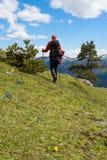Il viaggiatore passa attraverso il prato alpino, fra i wildflowers Fotografie Stock Libere da Diritti