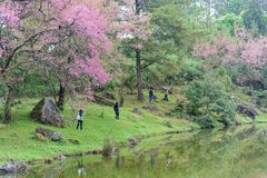 Il viaggiatore prende una foto intorno allo stagno con l'albero nella stagione invernale, Chiangmai, Tailandia del fiore di cilie Immagini Stock