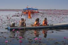 Il viaggio della barca turistica per vede il loto rosa Immagini Stock
