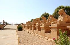 Il viale degli Sphinxes. Fotografie Stock Libere da Diritti