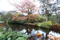 Il vicolo con giallo e rosso lascia nell'autunno in Wicklow Irlanda Immagine Stock Libera da Diritti