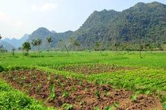 Il Vietnam - baia di lunghezza dell'ha - azienda agricola della Comunità di Bhaya - di Cat Ba Island - Viet Hai Immagini Stock Libere da Diritti