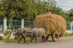 Il Vietnam - 'chi' del Cu Immagini Stock