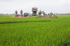 Il Vietnam, provincia di Bac Ninh Cimitero nel giacimento del riso immagine stock