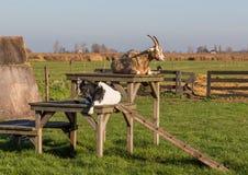 Il villaggio meraviglioso di Zaanse Schans, Netherland fotografia stock libera da diritti