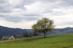 Il villaggio tradizionale alloggia il savsat di Artvin Fotografie Stock Libere da Diritti