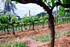Il vino di regione della Spagna producendo, vite sistema Immagini Stock