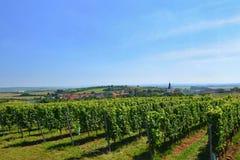 Il vino nella vigna Regione del vino di repubblica Ceca del sud della Moravia Immagini Stock