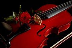 Il violino con colore rosso è aumentato Fotografia Stock Libera da Diritti