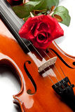 Il violino ed è aumentato Fotografie Stock Libere da Diritti