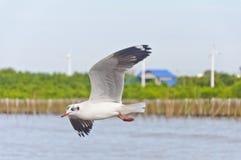 Il volo bianco del gabbiano in cielo sopra il mare Immagine Stock