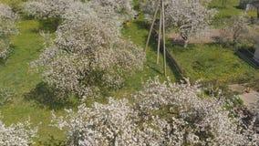 Il volo del fuco sopra il meleto sbocciante nel villaggio russo stock footage
